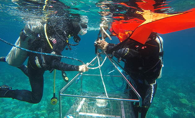 <p> 	1.3 Water sampler being deployed. Alex Hunter and Yvonne Sawall attach lift bags to the frame of the sampler, which will allow them to maneuver the sampler to its position in the reef after releasing it from the A-frame of the boat. Photo: Khalil Smith.</p>