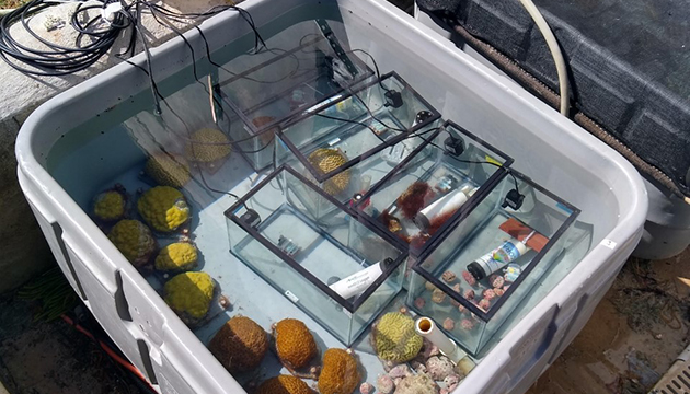 <p> 	1.7 Outdoor incubations of corals and algae measuring photosynthesis rates. Daytime respiration rates were measured as well, by darkening the chambers for 20 minutes every 2 hours.  Photo: Charlie Schneider.</p>