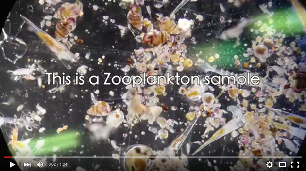 Zooplankton Ecology at BIOS