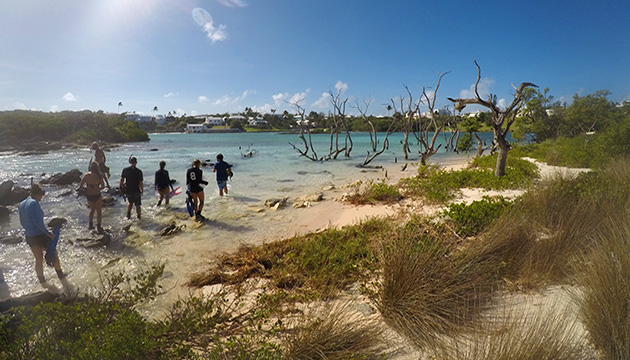 <p> 	Summer course students explore the Bermuda shorline in Hungry Bay.</p>