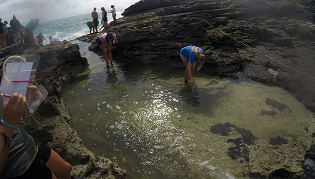 <p> Students investigate a tide pool environement.</p>