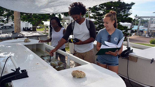 <p> 	Khalil Smith (middle) worked on a large, cross-Caribbean seagrass project. He assisted with the in-situ work in Bermuda, which included seagrass productivity measurements, a census of seagrass-associated invertebrates, grazing assays, and underwater cage maintenance.</p>