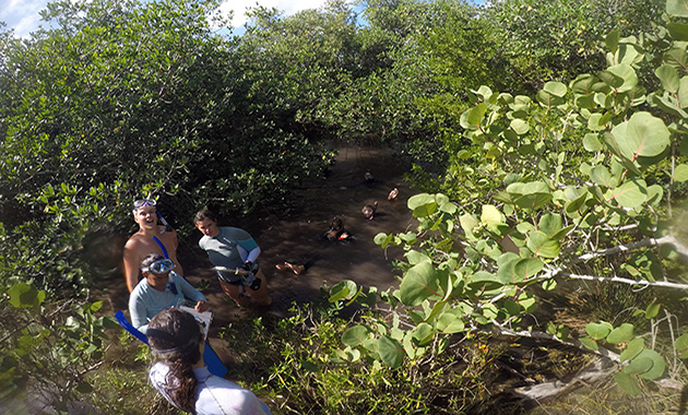 <p> 	Students in the field to study mangrove environments.</p>