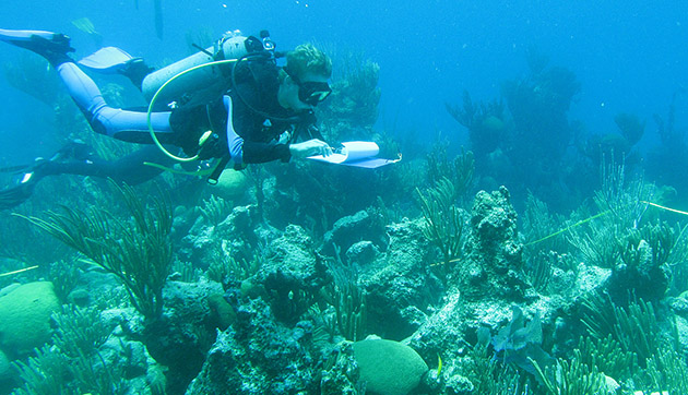 <p> 	Students on the Coral Reef Ecology course learn commonly used techniques to study benthic community structure at several reef types.</p>