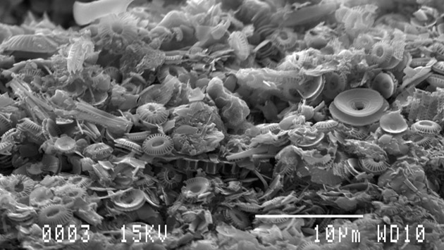 <p> 	Scanning electron micrograph of fecal pellet collected at 1500m depth. Shells of coccolithophores and diatoms are among the fragments.</p>
