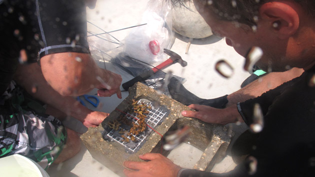<p> 	Students prepare <em>in situ</em> coral experiments.</p>