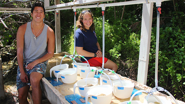 <p> 	2014 CABIOS intern Kevin Wong, and Hannah Reich, in the wet lab with juvenile corals.</p>