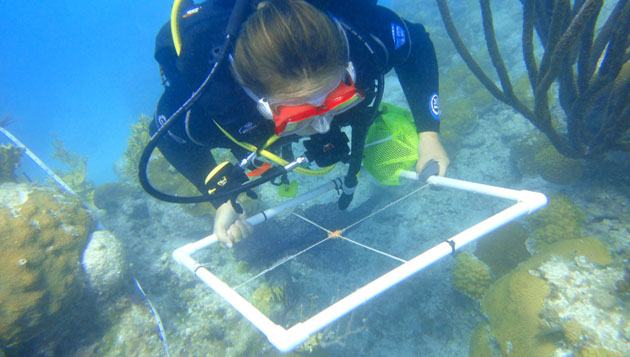 <p> 	A summer student conducting a transect on the reef.</p>