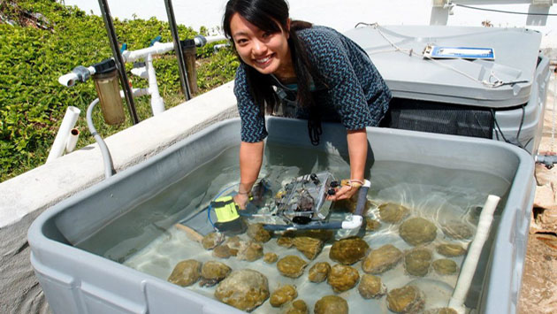 <p> 	Yuna Zayasu, POGO Center of Excellence student, measures the spectral reflectance of coral to evaluate changes in pigmentation as the seasons change.</p>