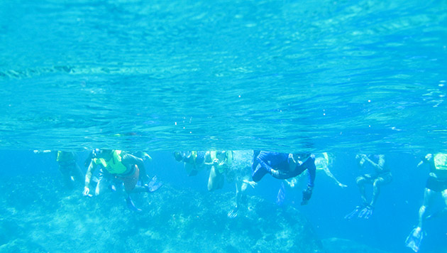 <p> 	Students snorkel at North Rock rim reefs.</p>
