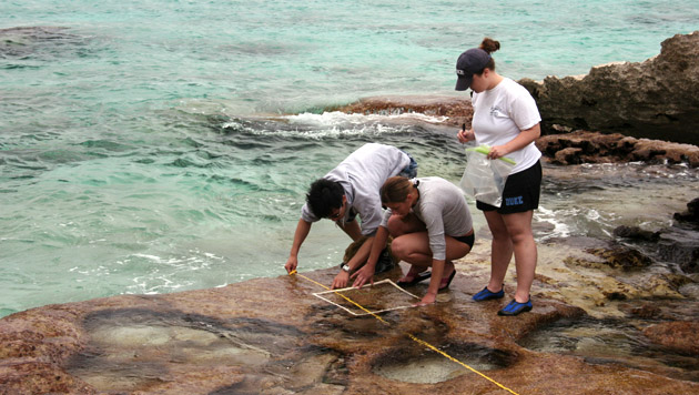 <p> 	Summer students conduct a shoreline transect.</p>