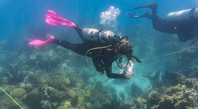 <p>Deirdre Collins surveying the coral and fish communities of Castle Harbor to better understand how human activities are impacting the health of coral reefs.</p>
