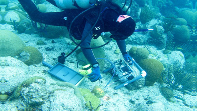 <p> 	A summer intern in the Coral Reef Ecology and Optics Lab (CREOL) measures the spectra of coral.</p>