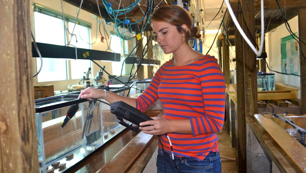 <p> 	REU Intern Kelly Speare takes temperature readings for her research into the combined effects of multiple stressors on juvenile coral health and development.</p>