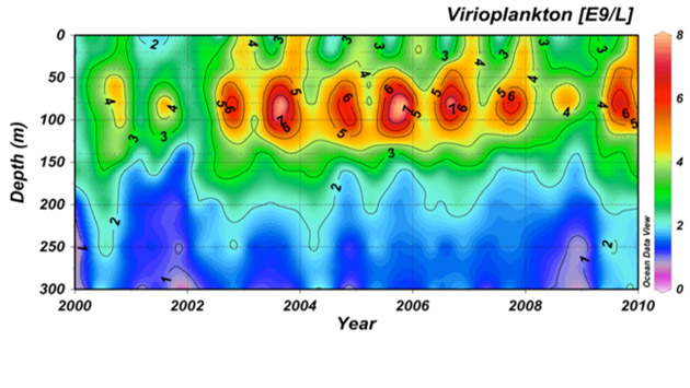 <p> 	Virus dynamics at the BATS site from 2000-2010. Note increased abundance at 80-100m that occurs every year in the latter half of the year.</p>