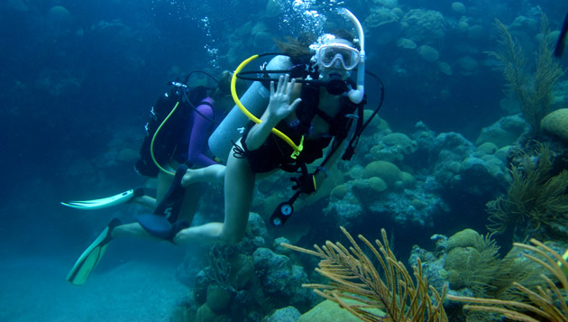 <p>Gaining dive experience on Bermuda's reefs. </p>