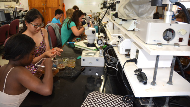 <p> 	Princeton University students in the Marine Biology lab.</p>
