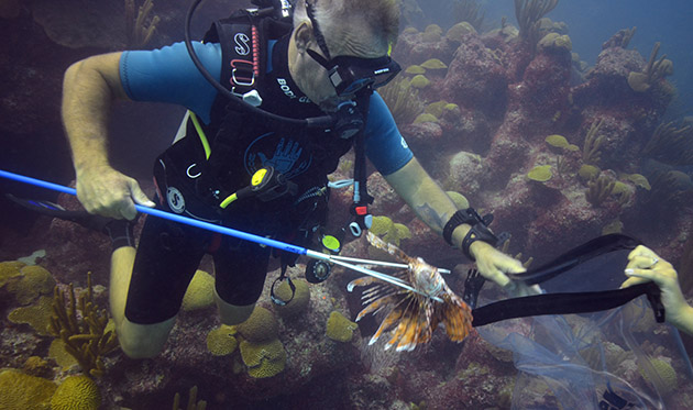 <p> 	Dive Master, Alex Hunter, snags a lionfish at Hourglass Reef.</p>