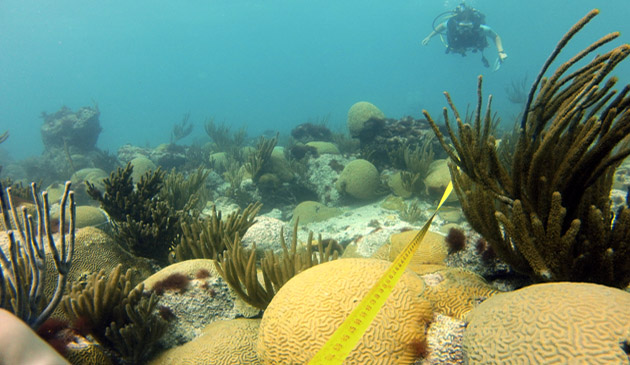 <p> 	Researchers conduct a reef transect near Natural Arches.</p>