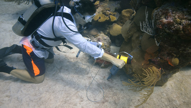 <p> 	Eric Hochberg takes spectrometer readings on the corals of Hogbreaker Reef.</p>