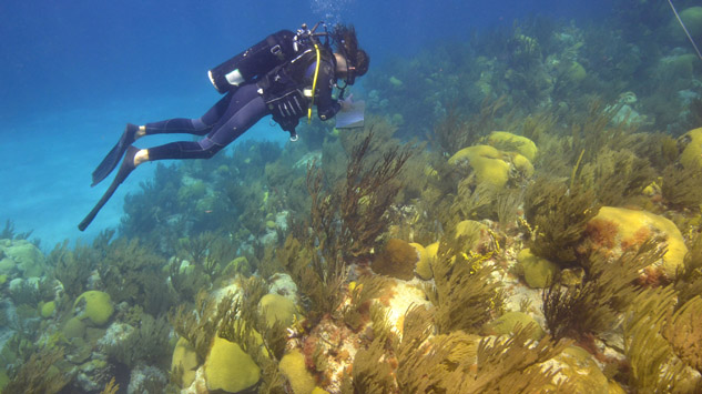 <p> 	Tim Noyes conducts a roving fish count during a reefscape survey dive.</p>