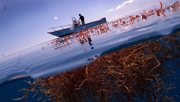 sargassum and boat
