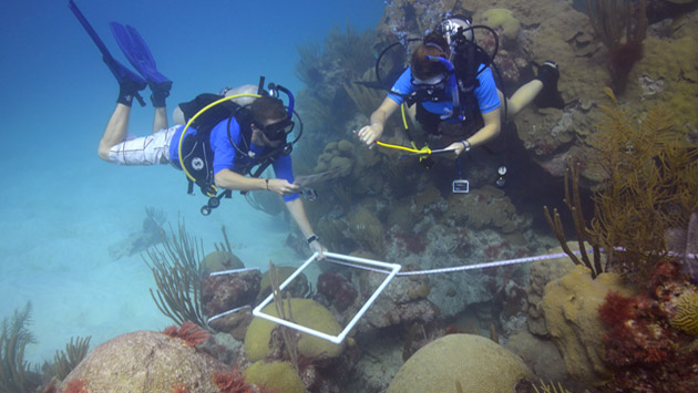 <p> 	Ryan Woods and Whitney Jailley use a transect and photoquad to identify marine invertebrates on North East Breakers reef.</p>