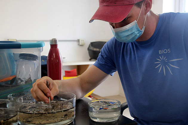 <p> William Welch is studying mechanical engineering at the University of Waterloo (Canada). His internship focused on observing the sizes and amounts of microplastics on Bermuda's coastlines, and supporting BIOS in the beta testing of low-cost microscope photography for the creation of a digital plankton library called Planktos.</p>